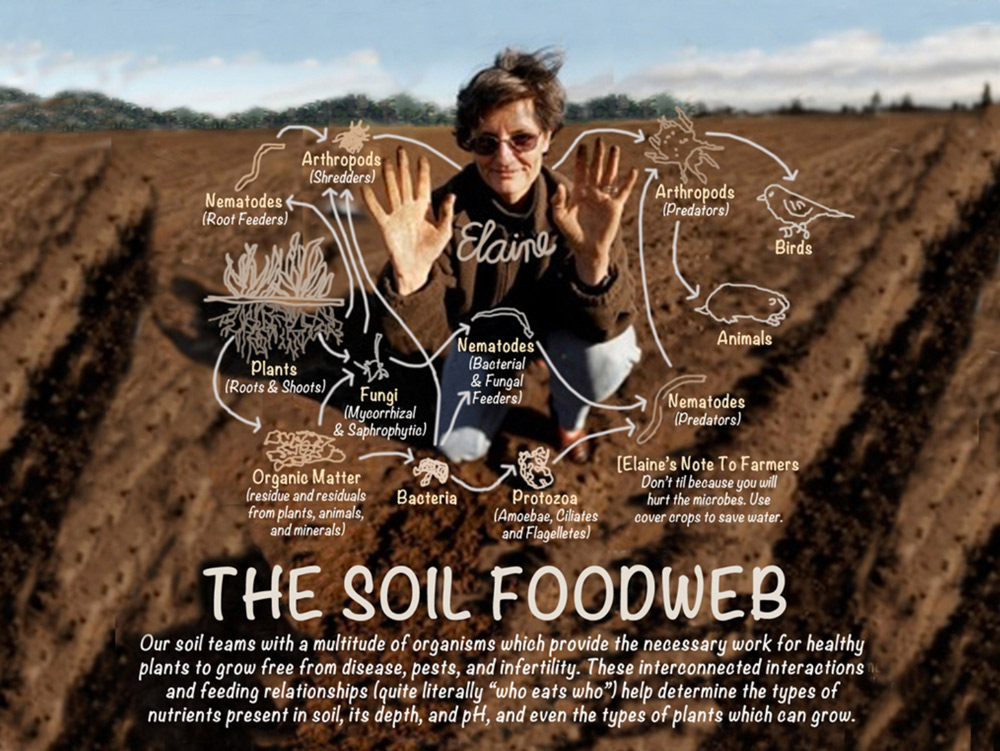 Dr. Elaine Ingham and The Soil Foodweb