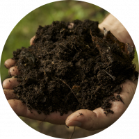 Restoring the Soil Food Web